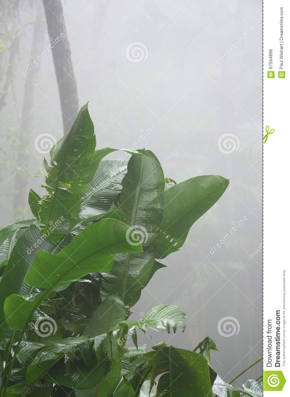 Green leafed plant in Jungle