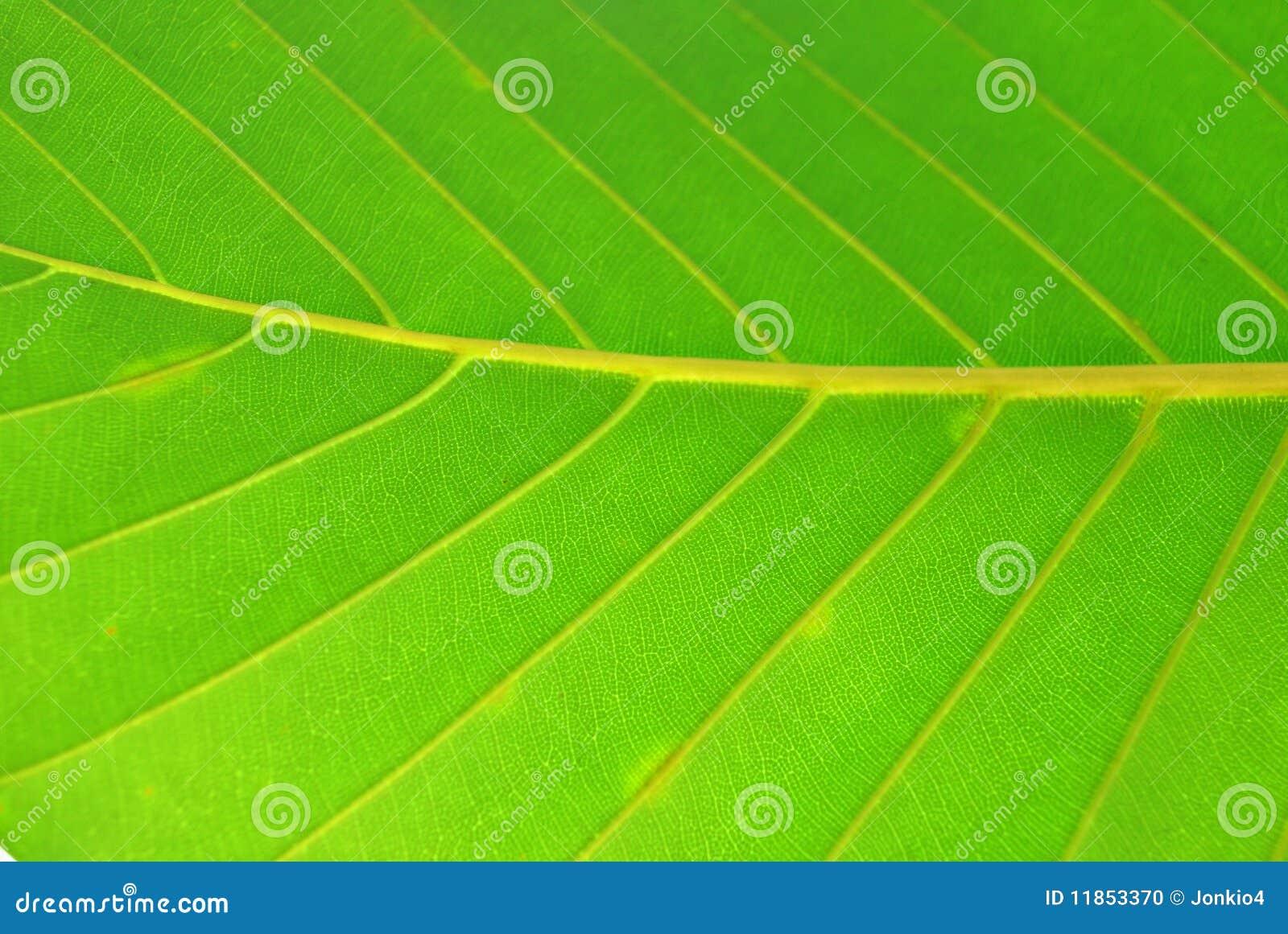 Green leafen