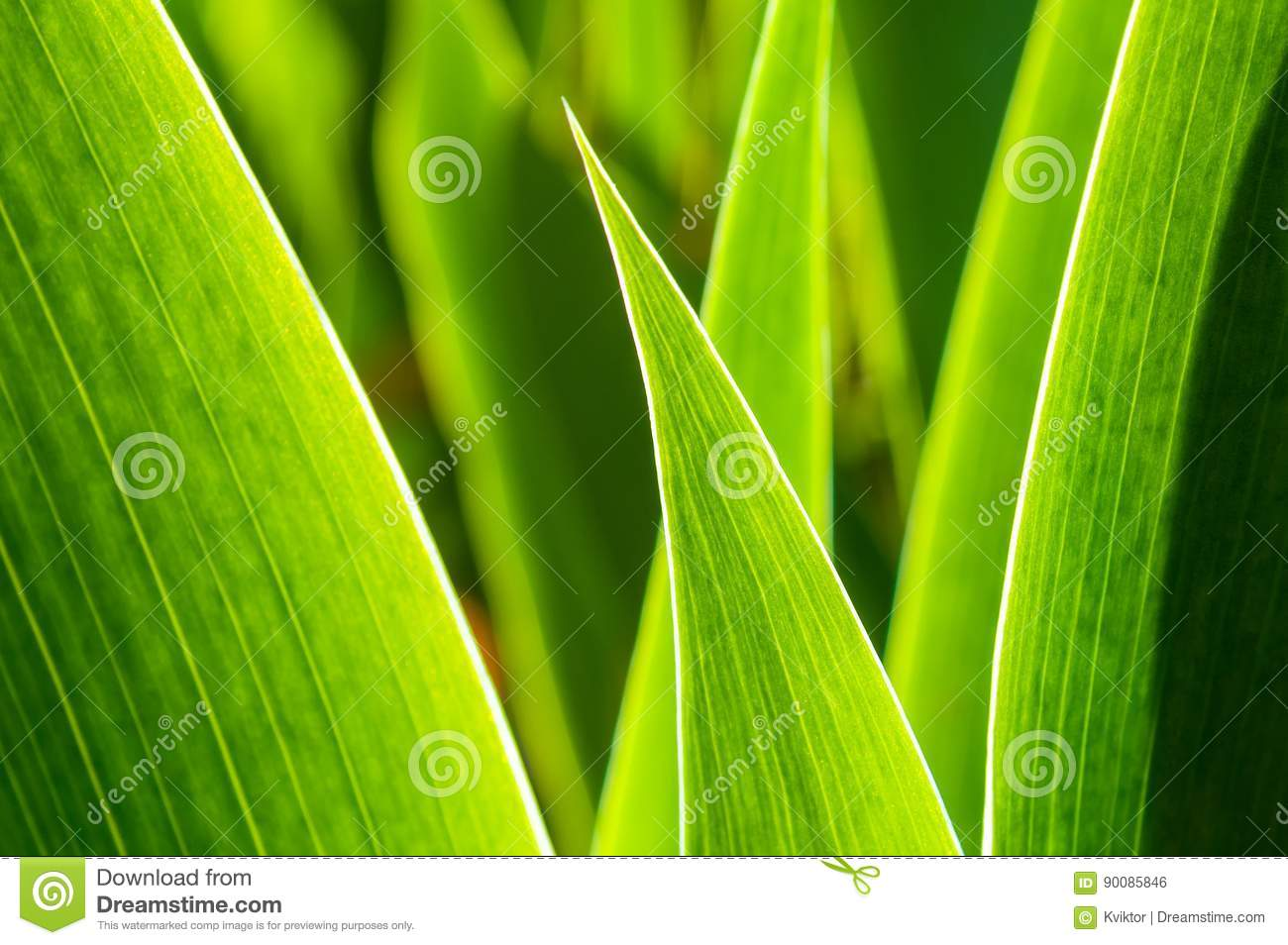 Green Leafs In Abstract Zen Style Stock Photo Image Of Artistic Garden 90085846