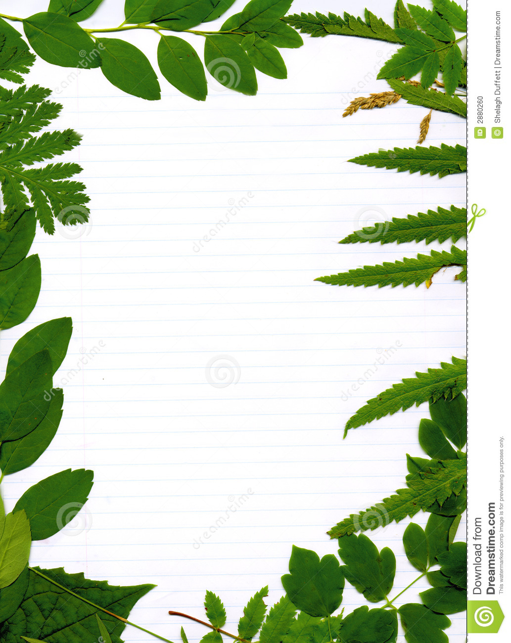 Leafy green natural border on lined paper framing blank center.