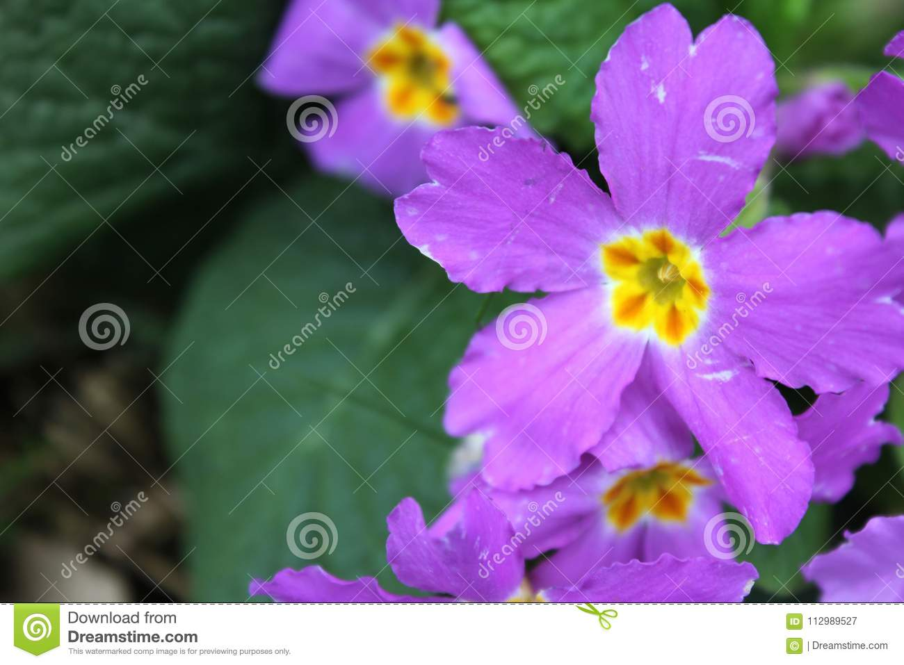 Green Leafy Pink Flower Picture