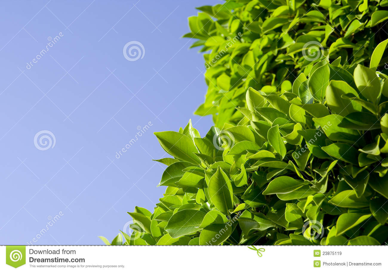 Download Green leaves stock image. Image of blue, spring, bright - 23875119