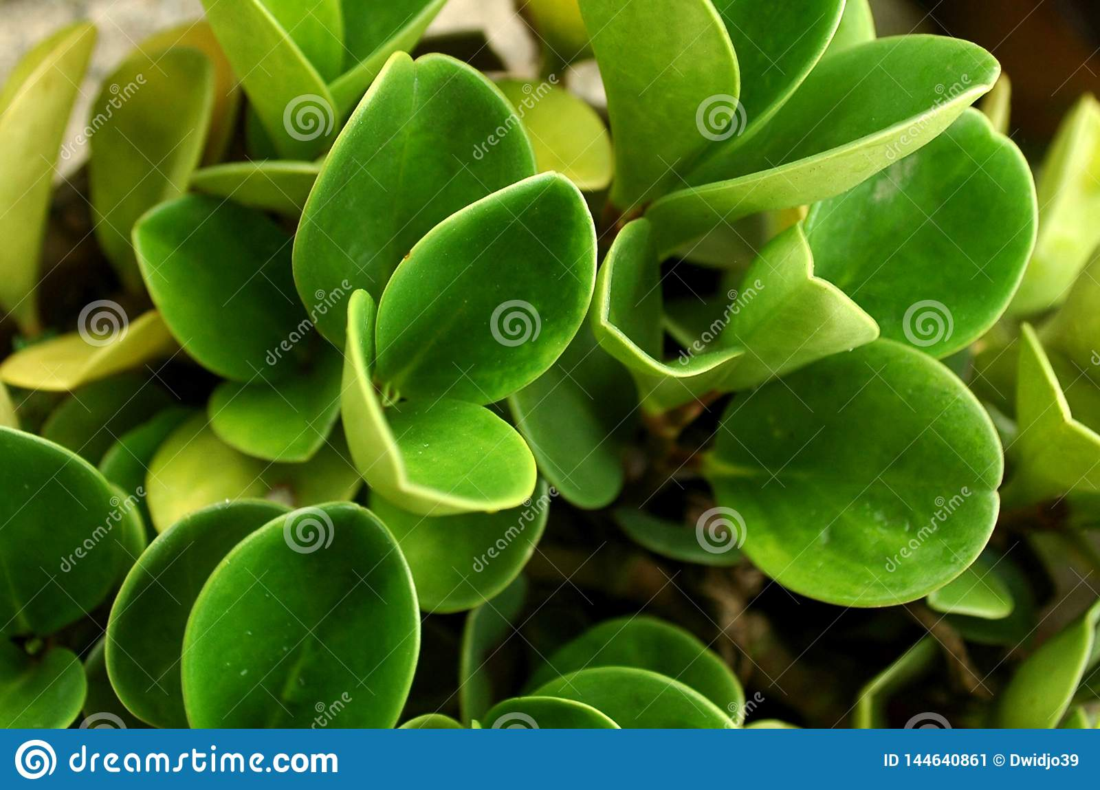 Natural Thick Green Leaves  Close up- bird view