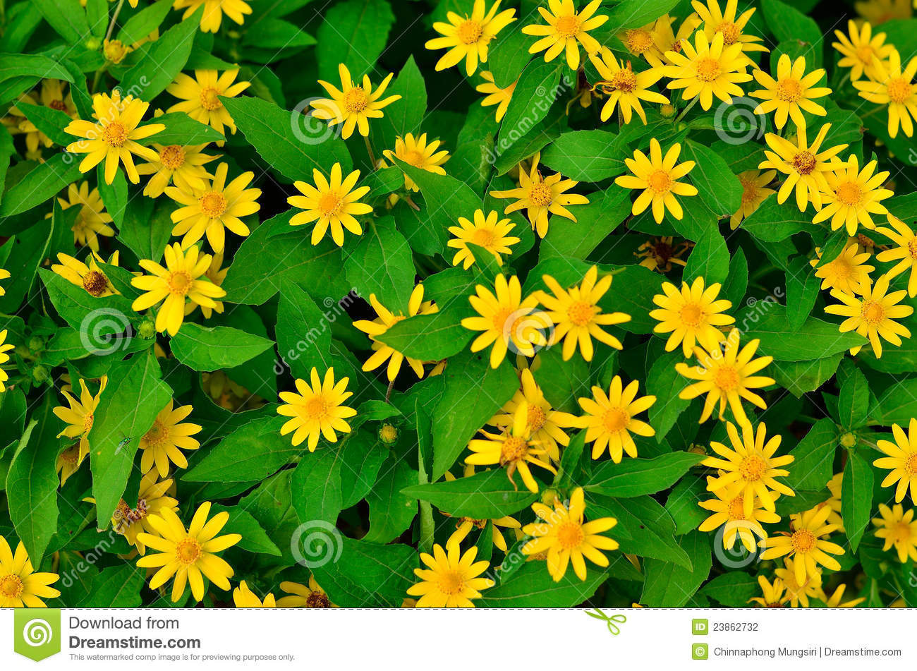 Yellow And Green Floral Background