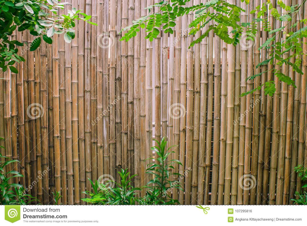 Green Leaves With Bamboo Wall Background For Garden