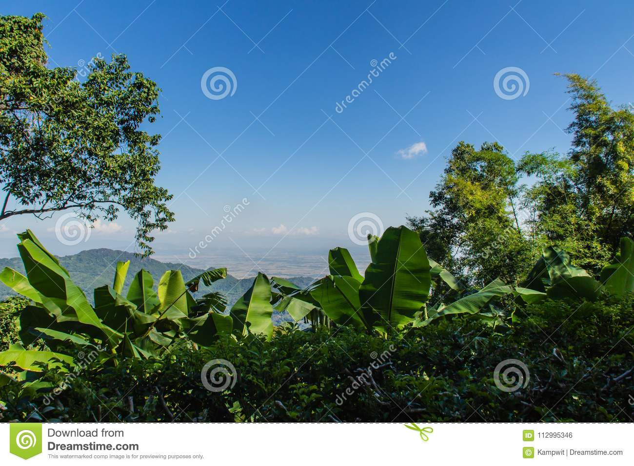 Green leaves of banana, bamboo and tree frame with blue sky background and copy space. Nature frame of green leave branches on blu