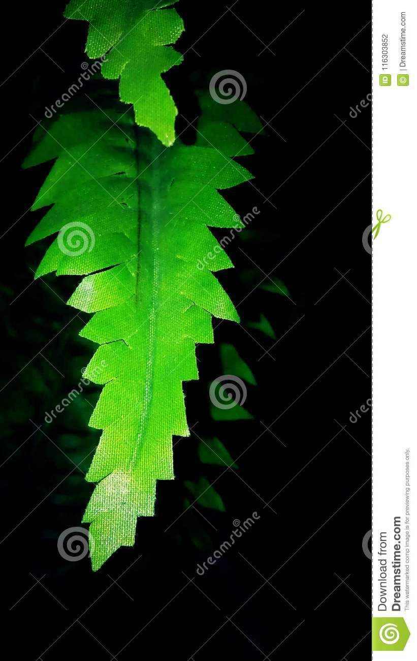 Green Leaves On Black Background Stock Photo Image Of