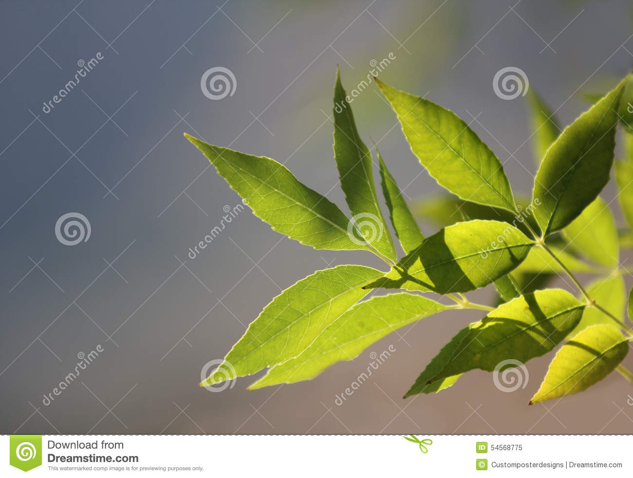 Download Green Leaves With A Blue Sky Background. Stock Image - Image of background, freshness: 54568775