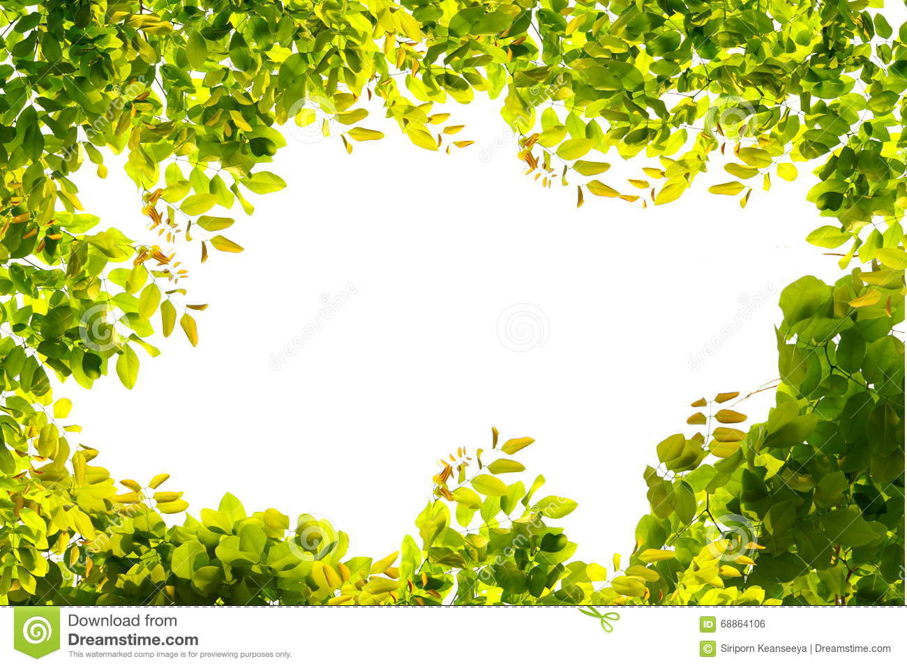 green leaves border nature on white isolate stock photo