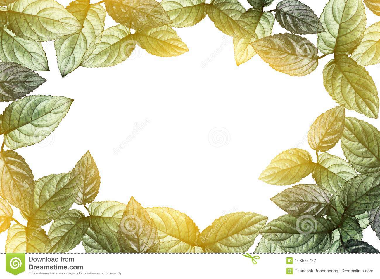 Green Leaves Border And Sunlight Transparent On White Background Stock Photo Image Of Beauty Foliage 103574722