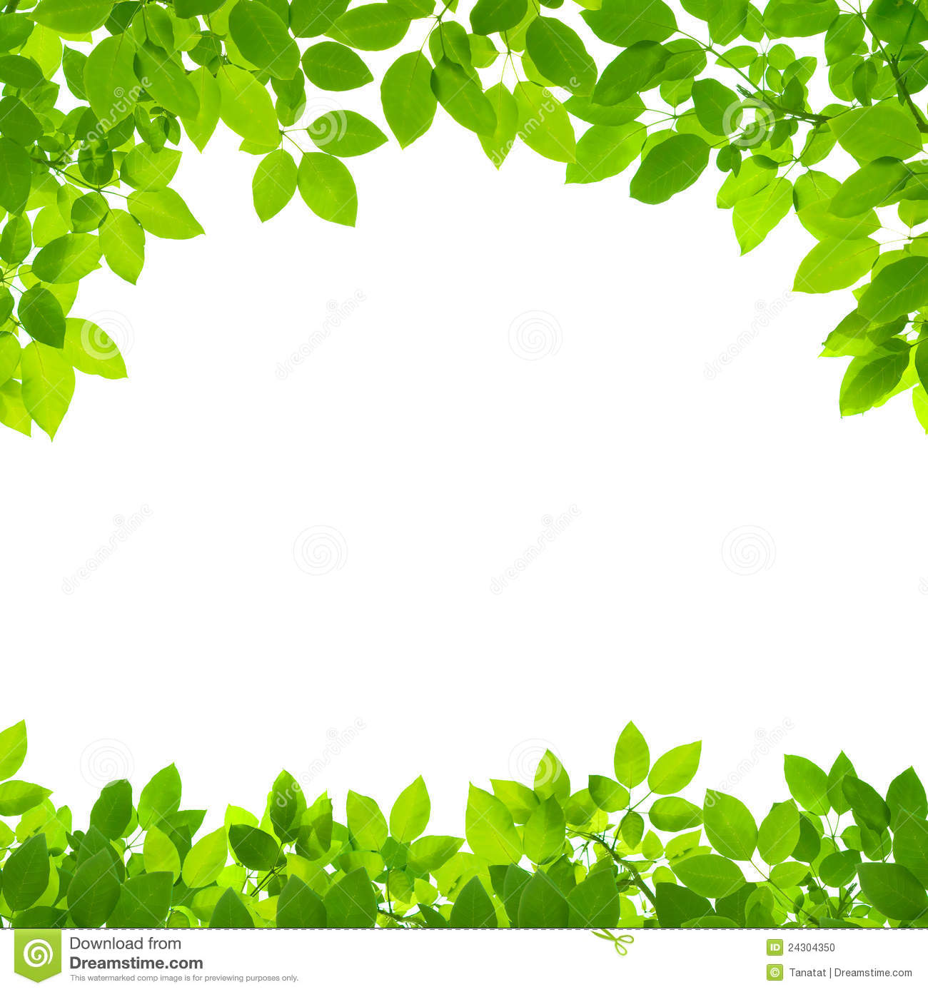 Green Leaves Border On White Stock Photo Image Of