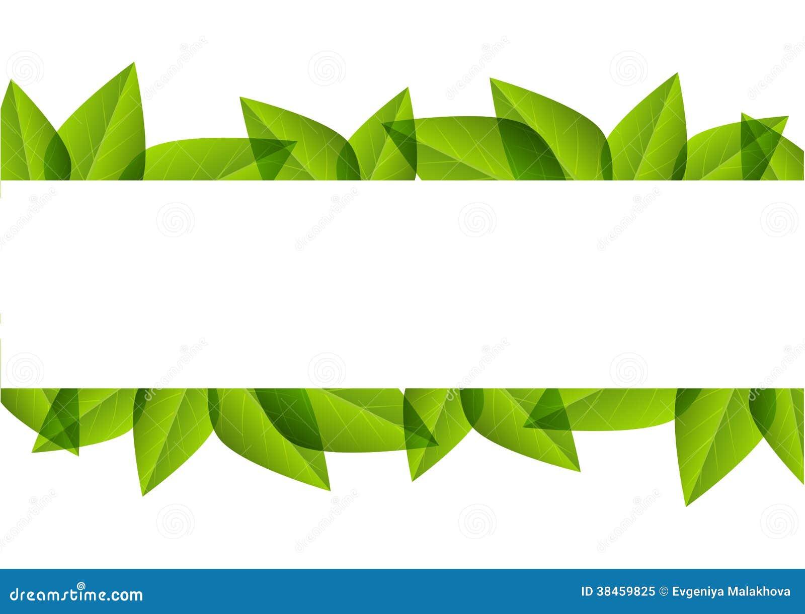 Green Leaves Border Stock Vector Image Of Fresh Nobody
