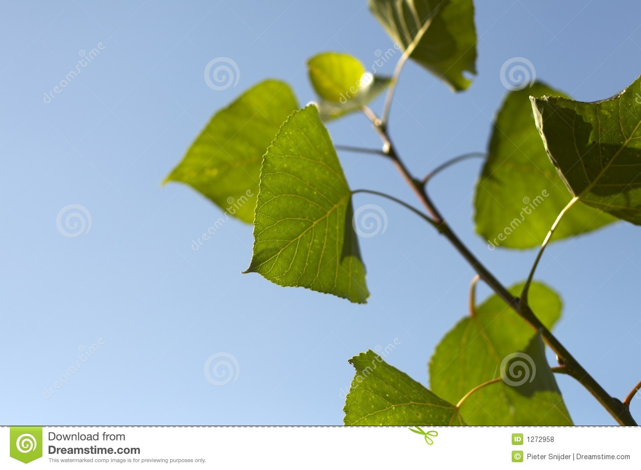 how to clean green leaves
