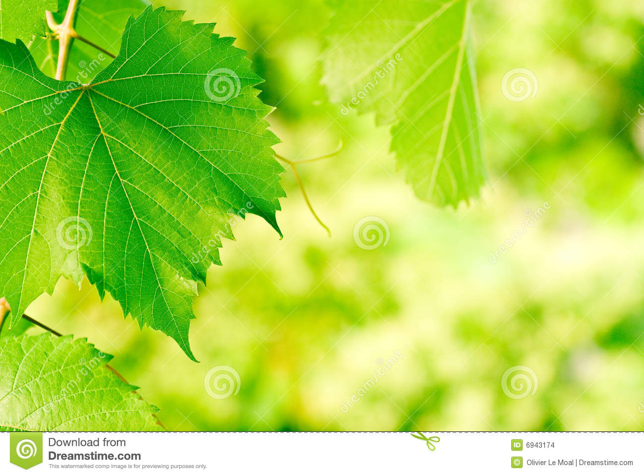 Green leaves - Environment