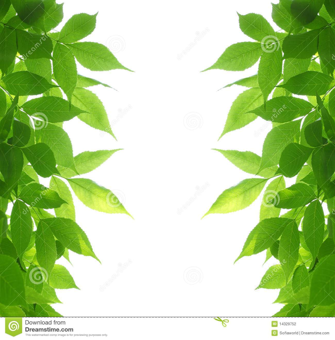 Green leaves frame stock photo image of sunshine fresh 14329752 - Marcos para plantas ...