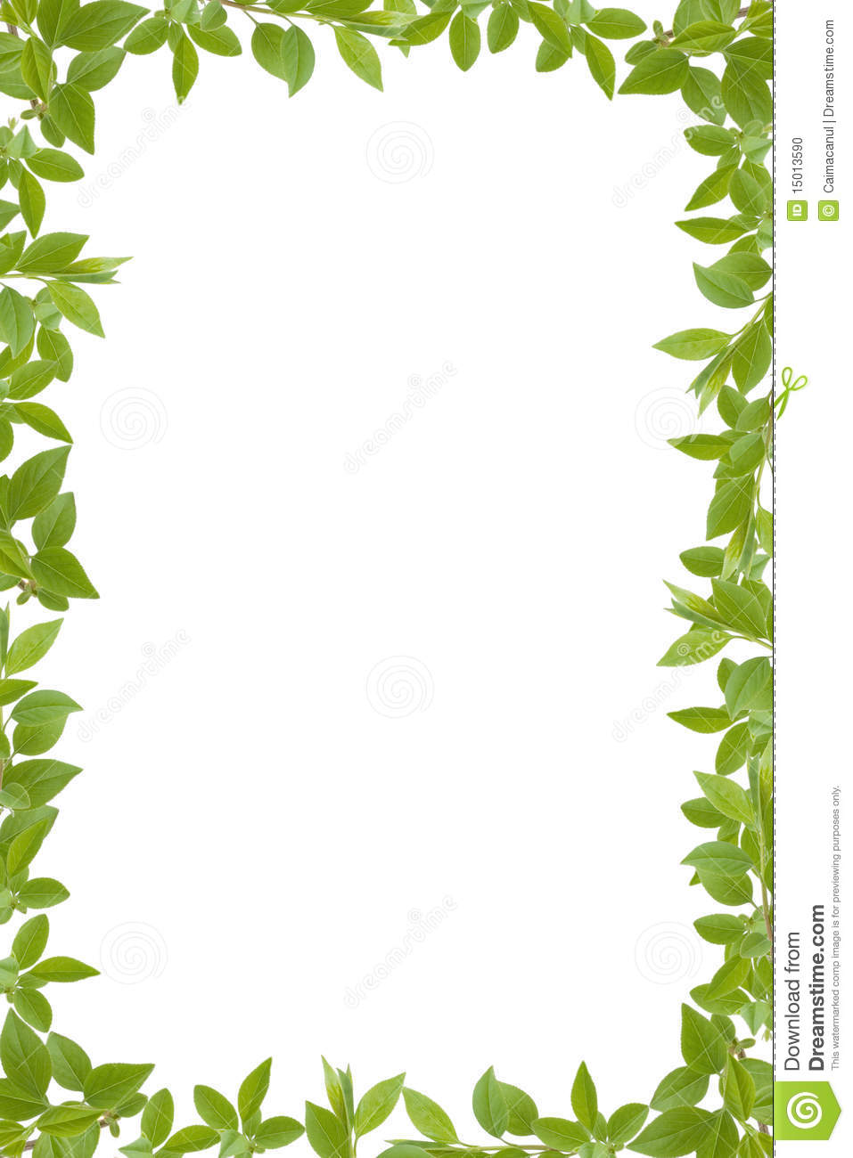 green leaves frame stock photo image 15013590 green leaf border clip art watercolor green leaf clip art free download