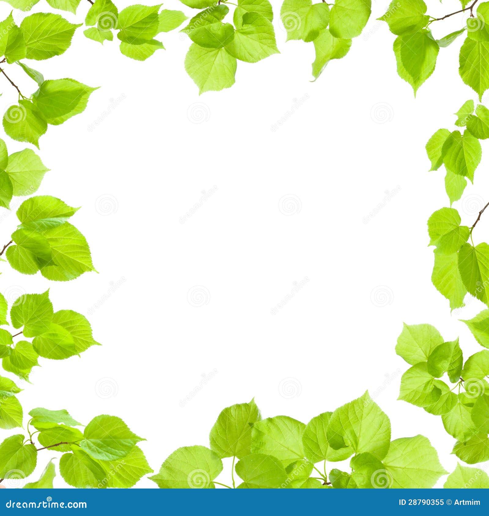 Green Leaves Frame Roy...