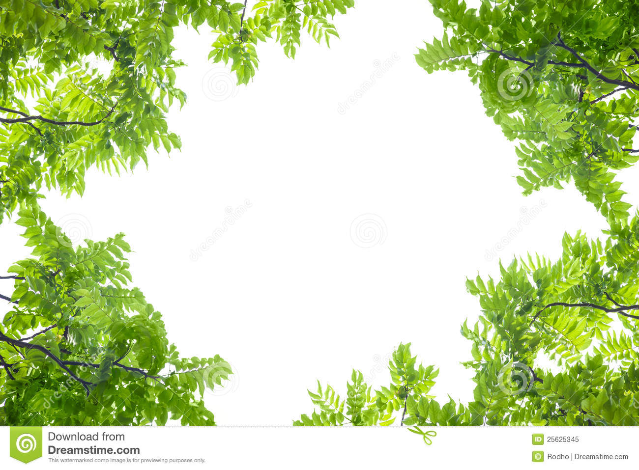Green Leaves Frame On White Background Royalty Free Stock