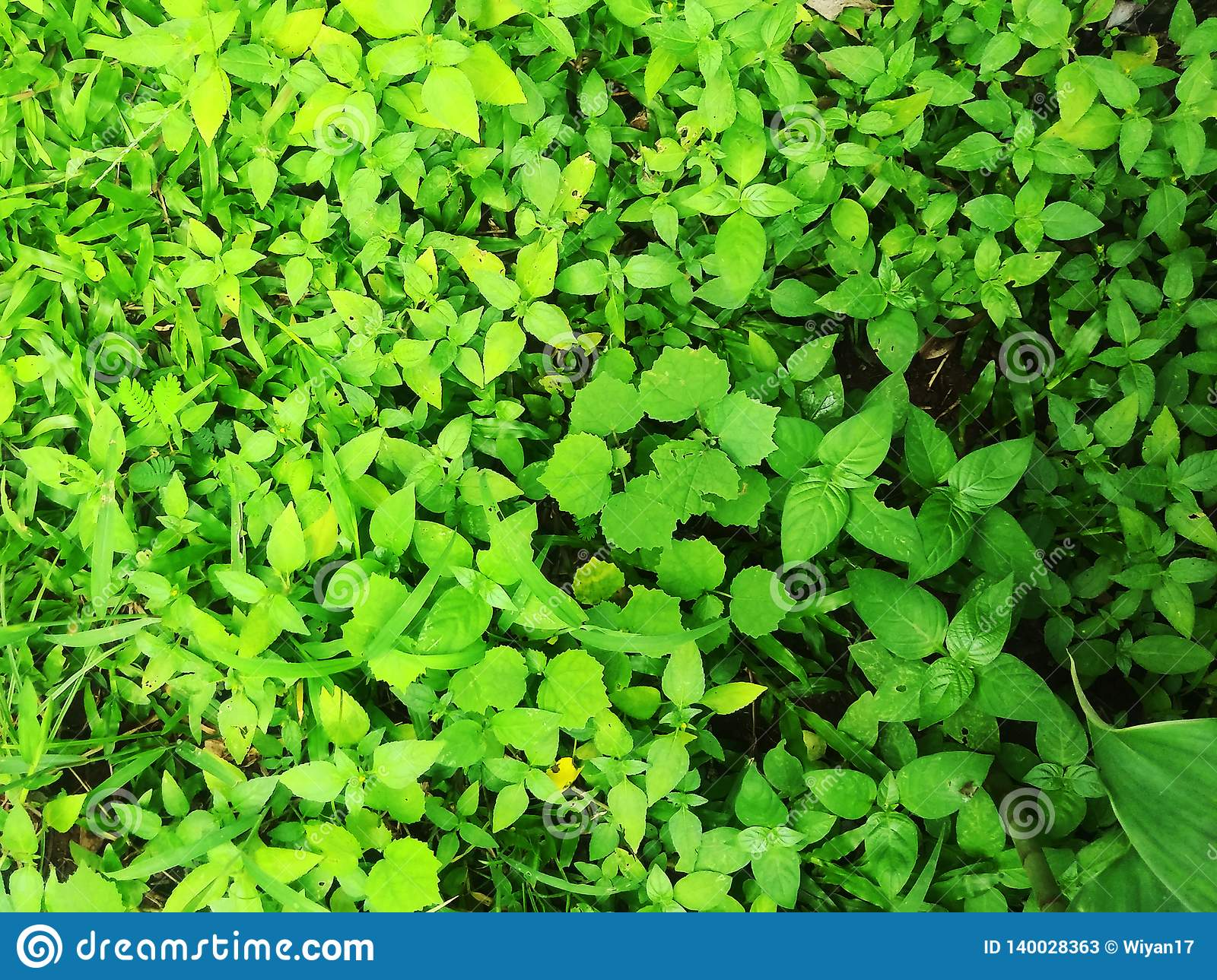 Green leaves in the garden