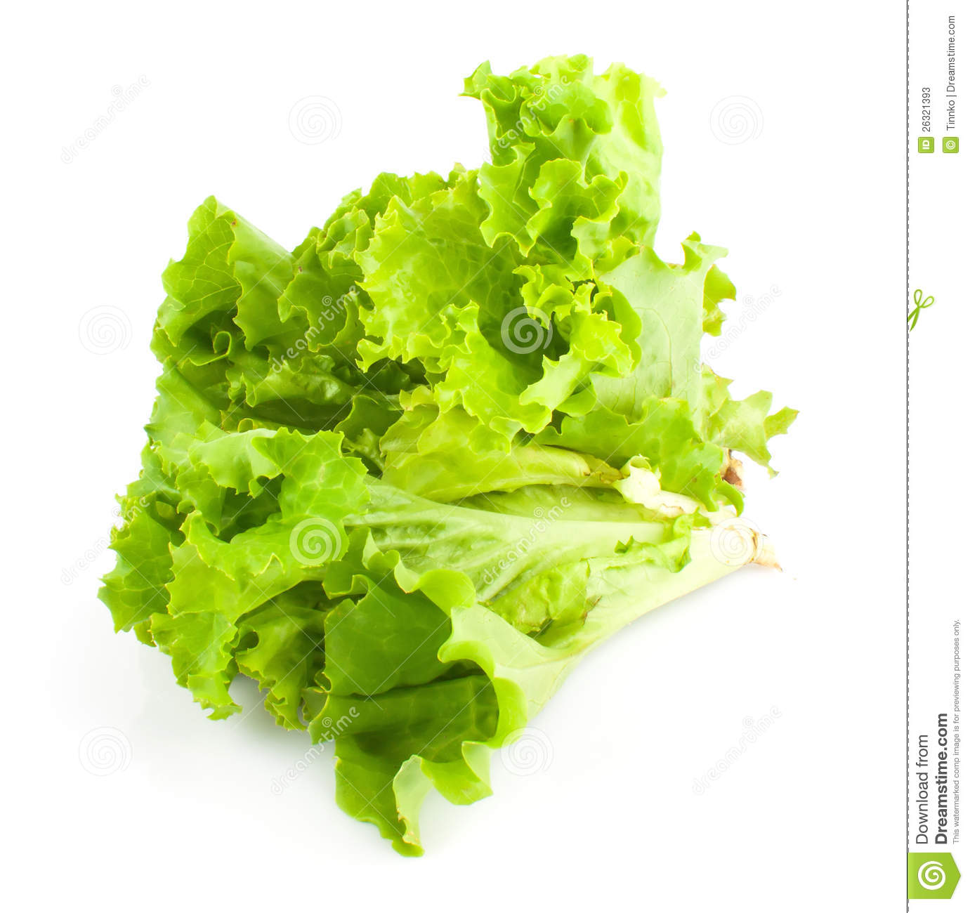 Green Leaves Of Lettuce Salad Stock Photos - Image: 26321393