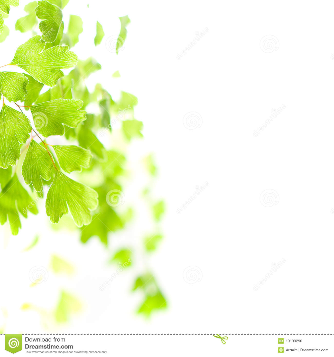 light green leaves background - photo #16