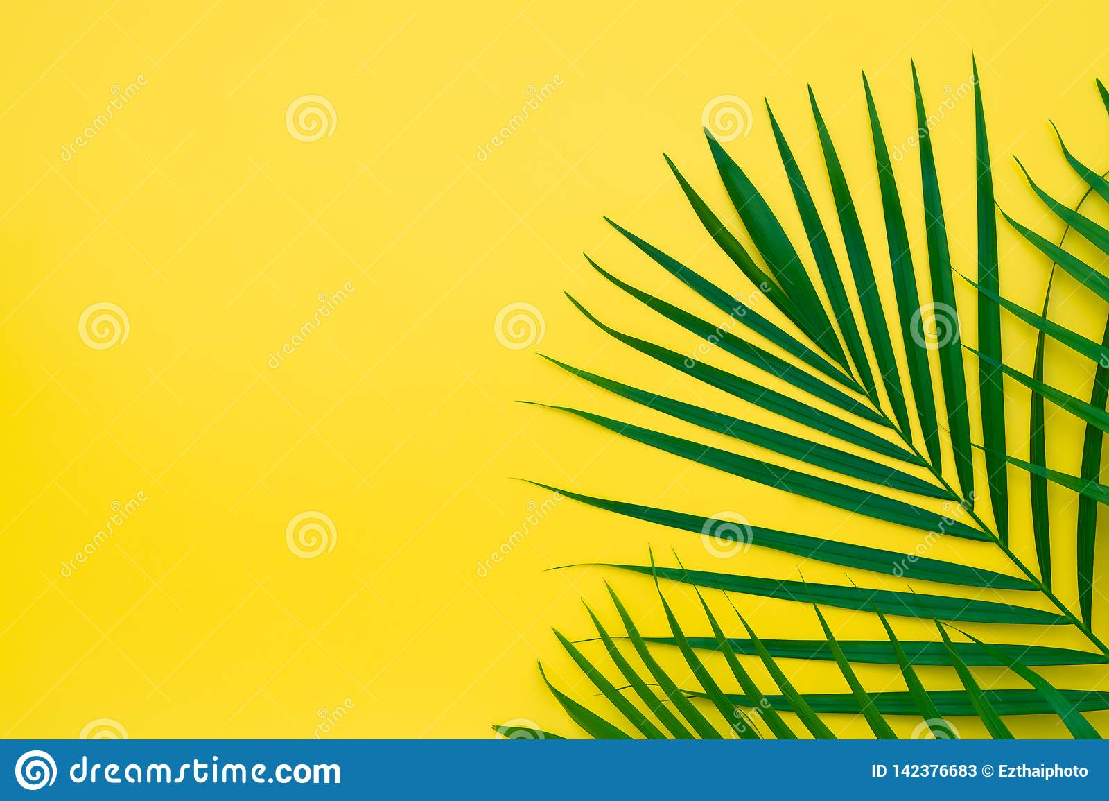 Green leaves of palm tree on yellow background. Flat lay minimal nature style of tropical palm leaves on yellow background.