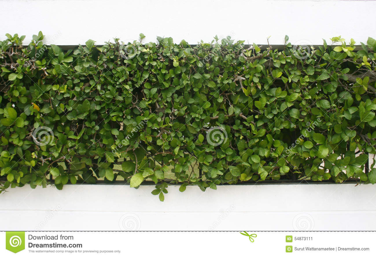 Green leaves wall and brick floor stock photo for Green floor plant