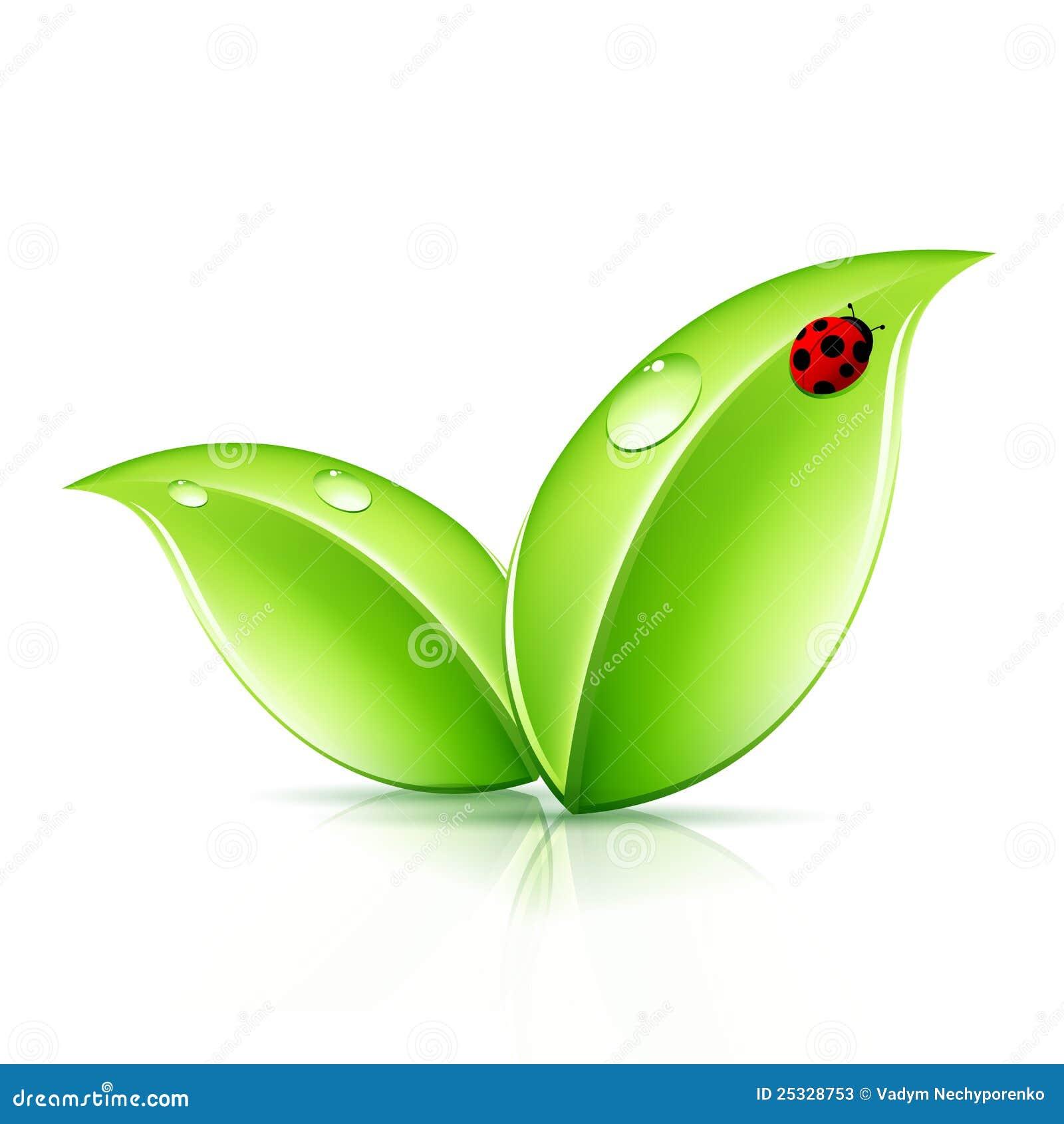 Symbol Of Leaf Theleaf Co