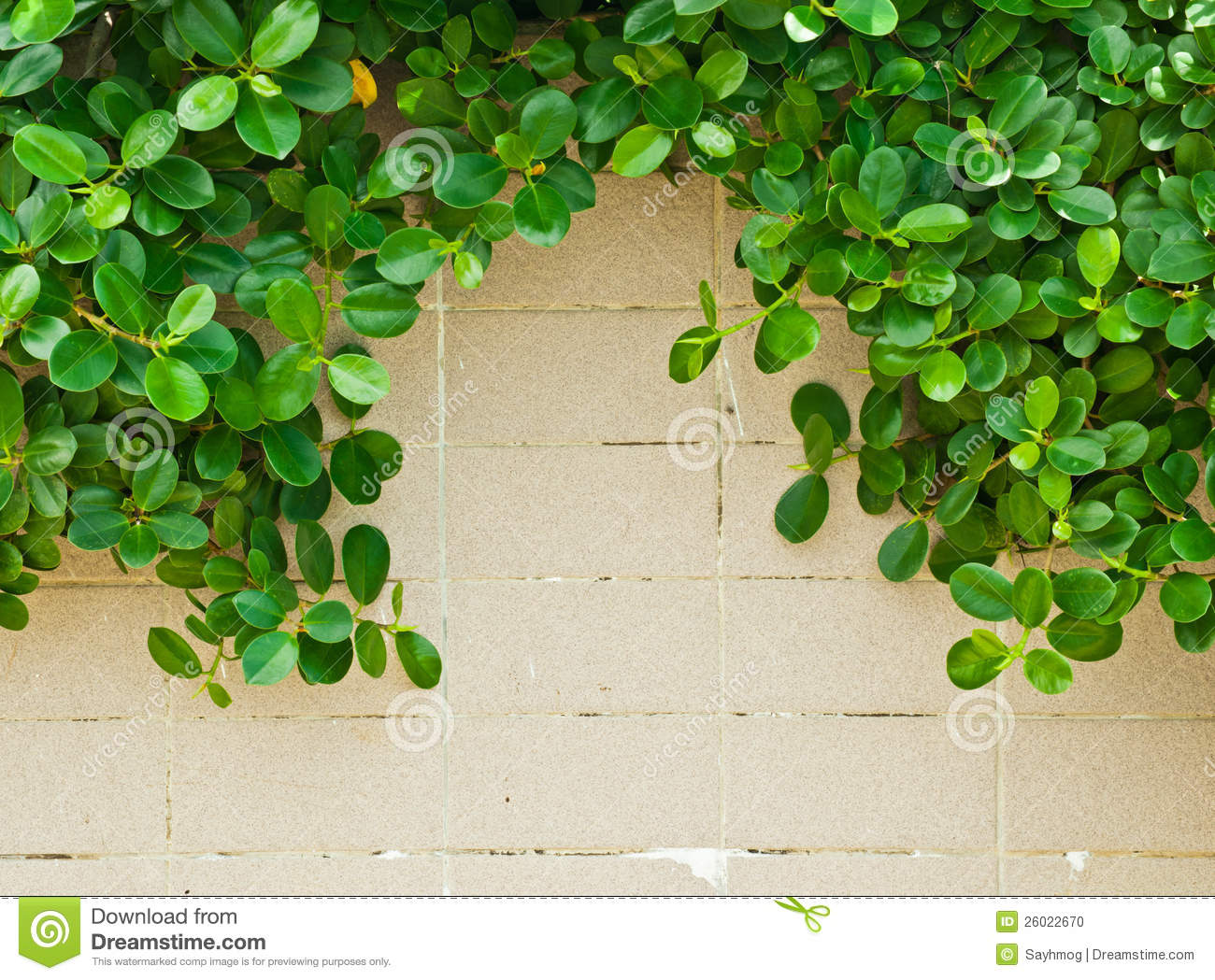 Download Green leaves on tile wall stock photo. Image of organic - 26022670