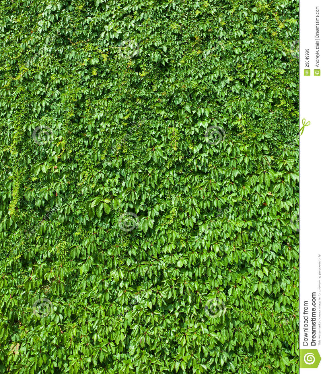 Green Leaves Top View Nature Background Stock Image