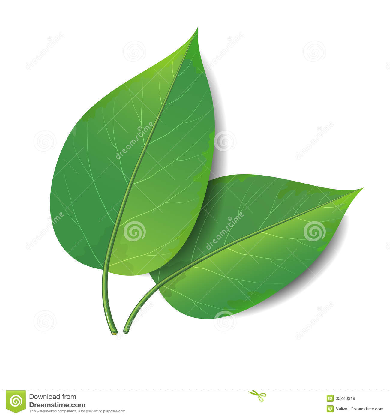 Green Leaves Royalty Free Stock Images - Image: 35240919