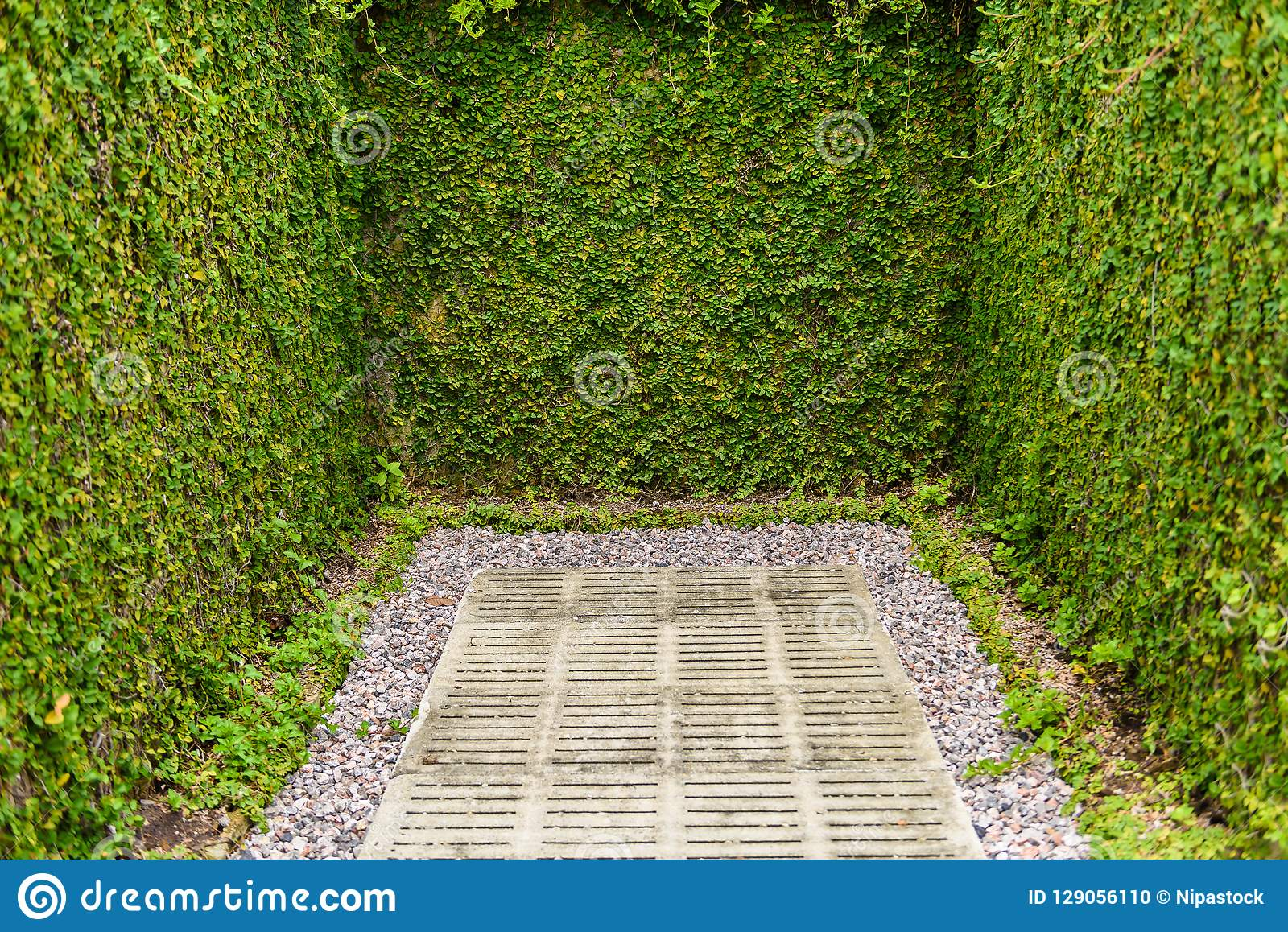 Green Leaves Wall Fence With Concrete Use For Decorative