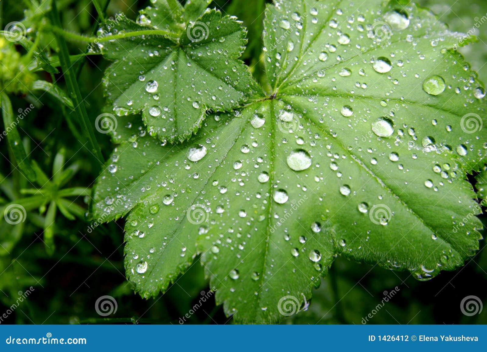 Green Leaves Teen Dreams 9