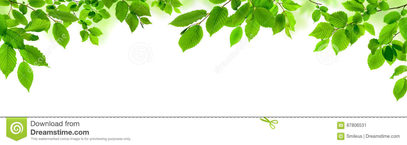 Green leaves on white as a wide border