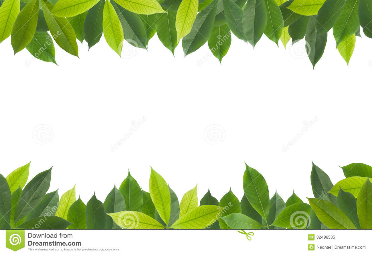 Green Leaves On White Background Stock Image Image 32486585