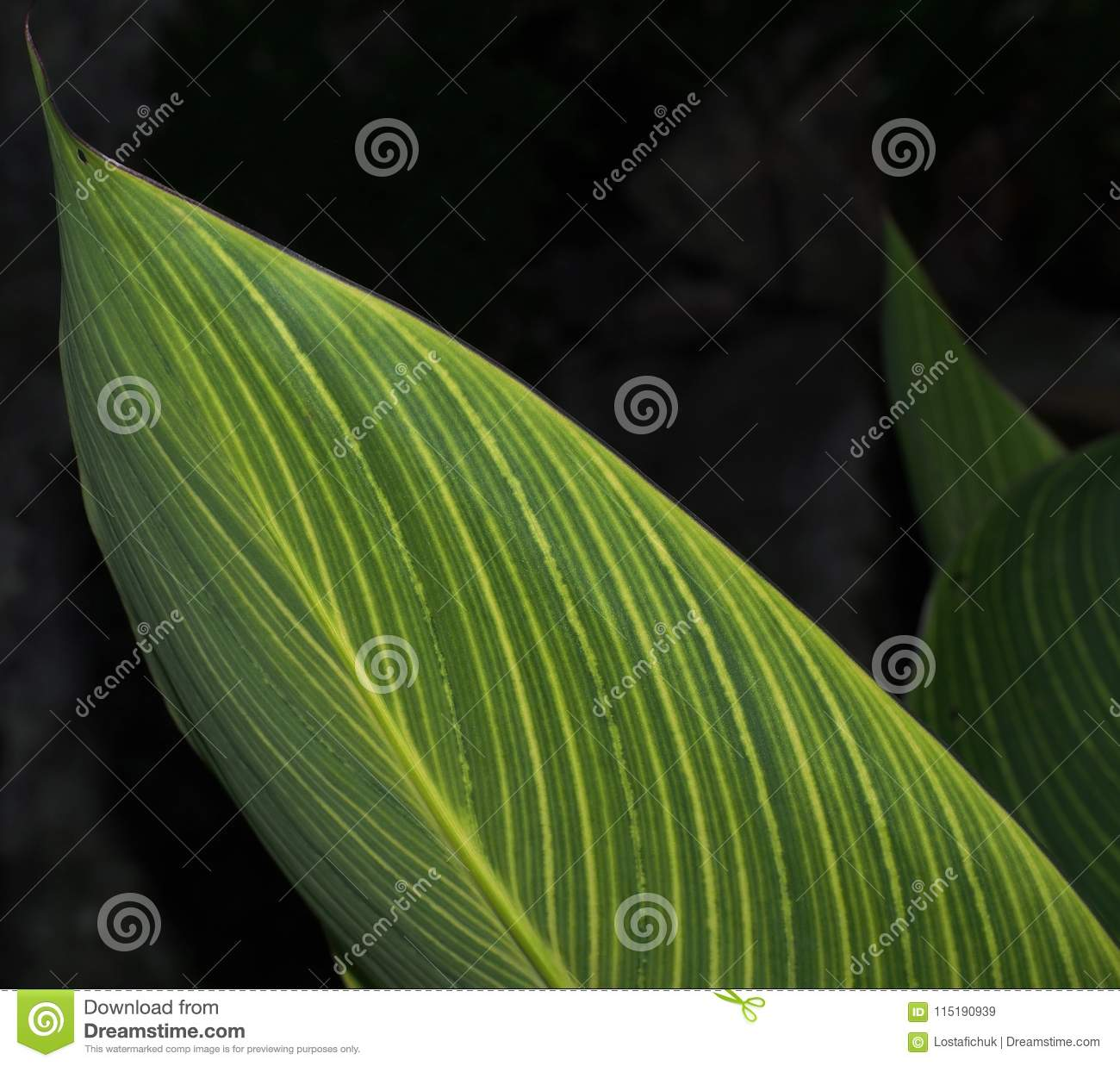 Green Leaves With Yellow Stripes