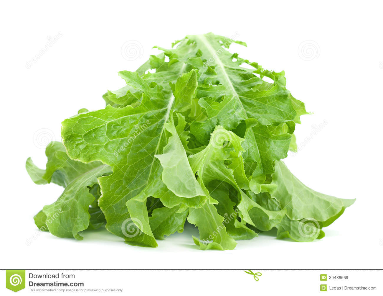 how to cut leaf lettuce for salad
