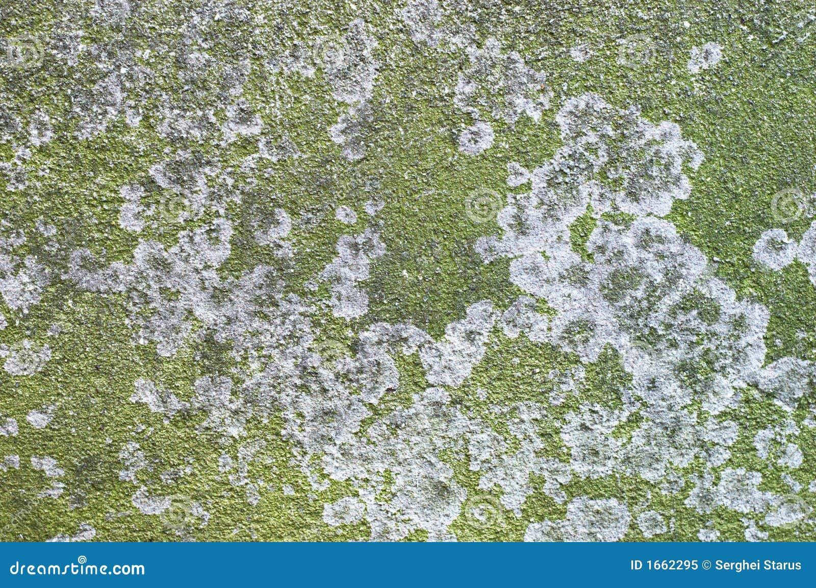 Green Lichen On Concrete Slab Royalty Free Stock Photo