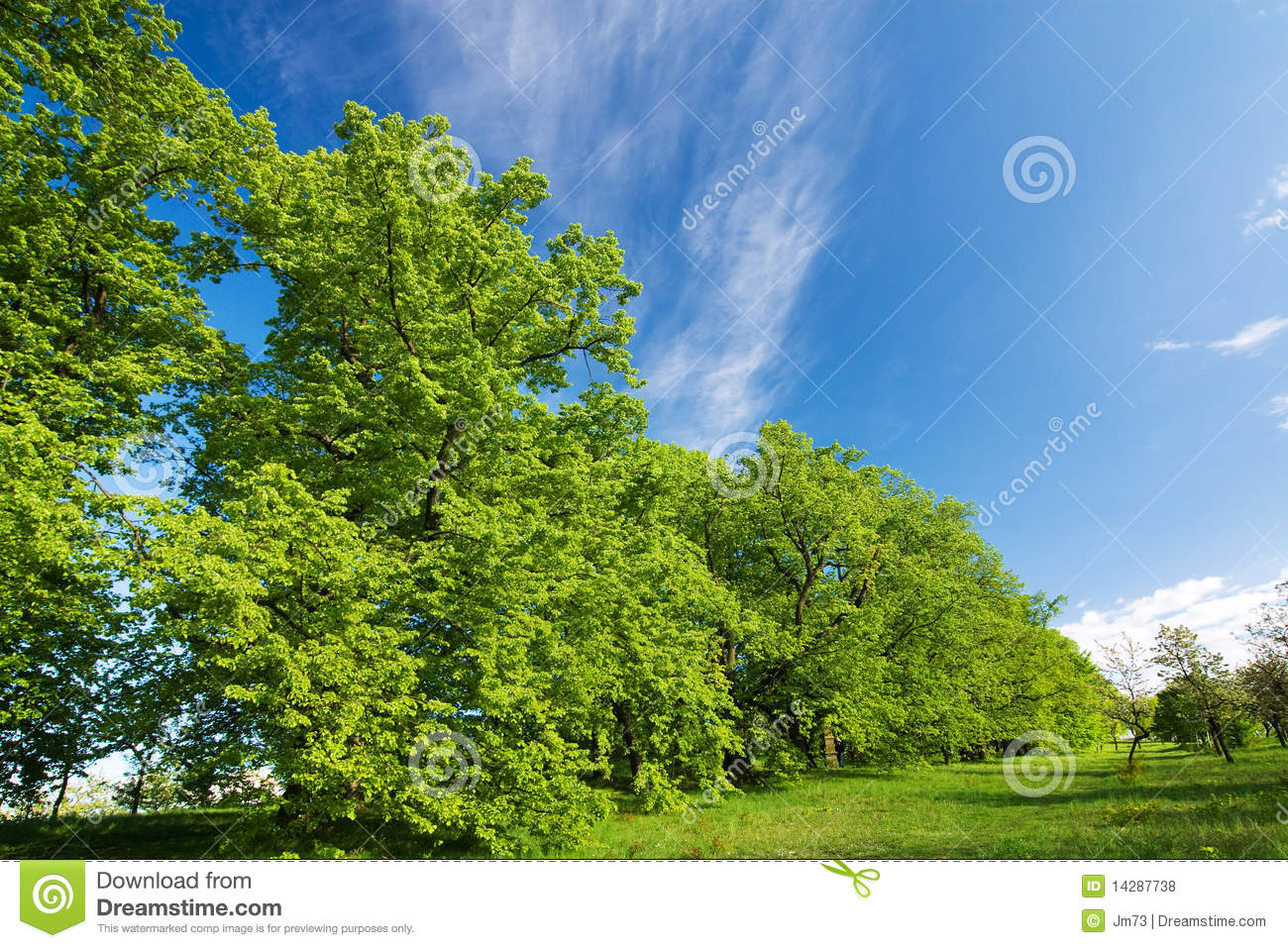 Green lime tree and blue sky royalty free stock photos for Lime and blue