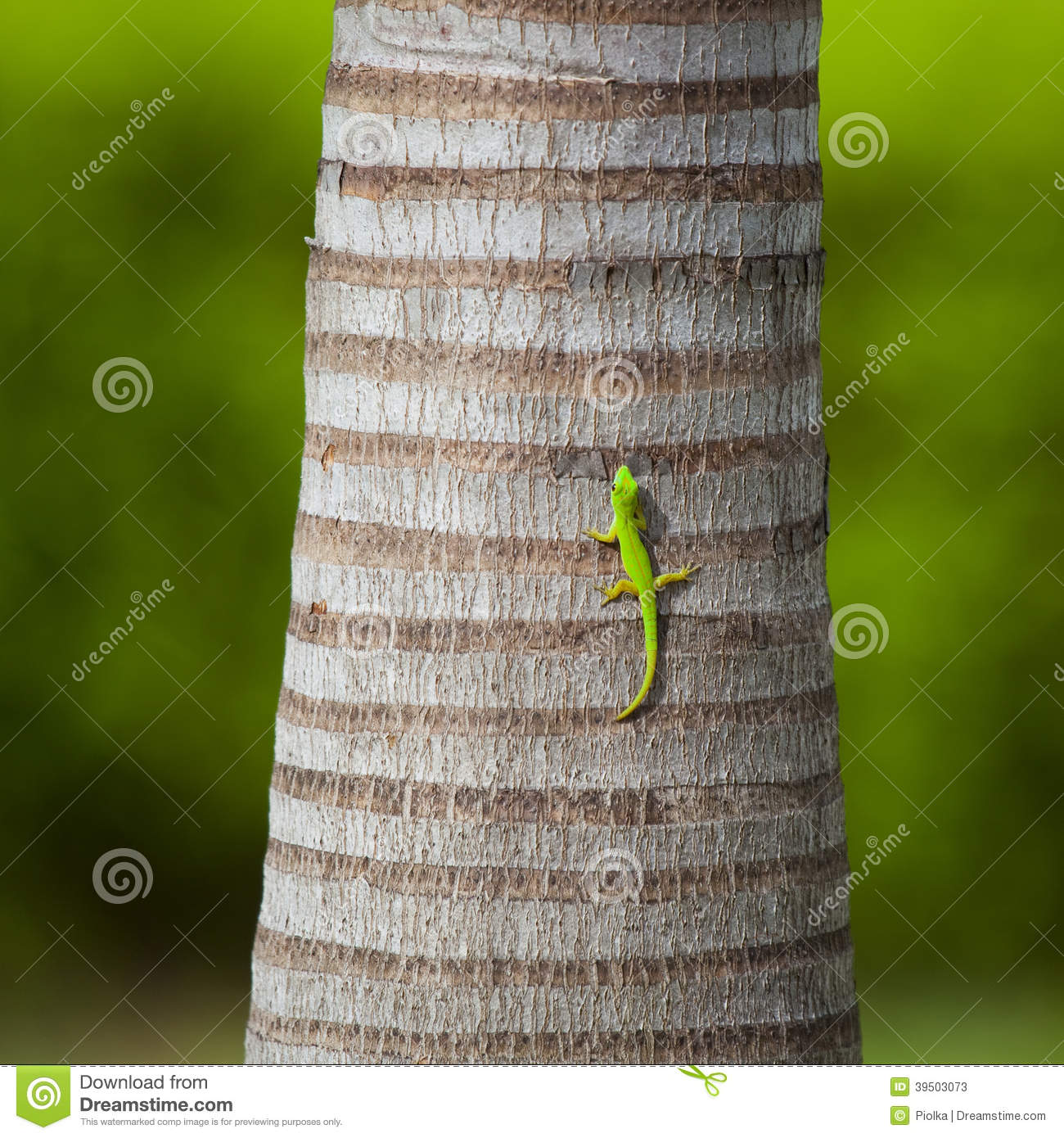 Green lizard on a palm trunk