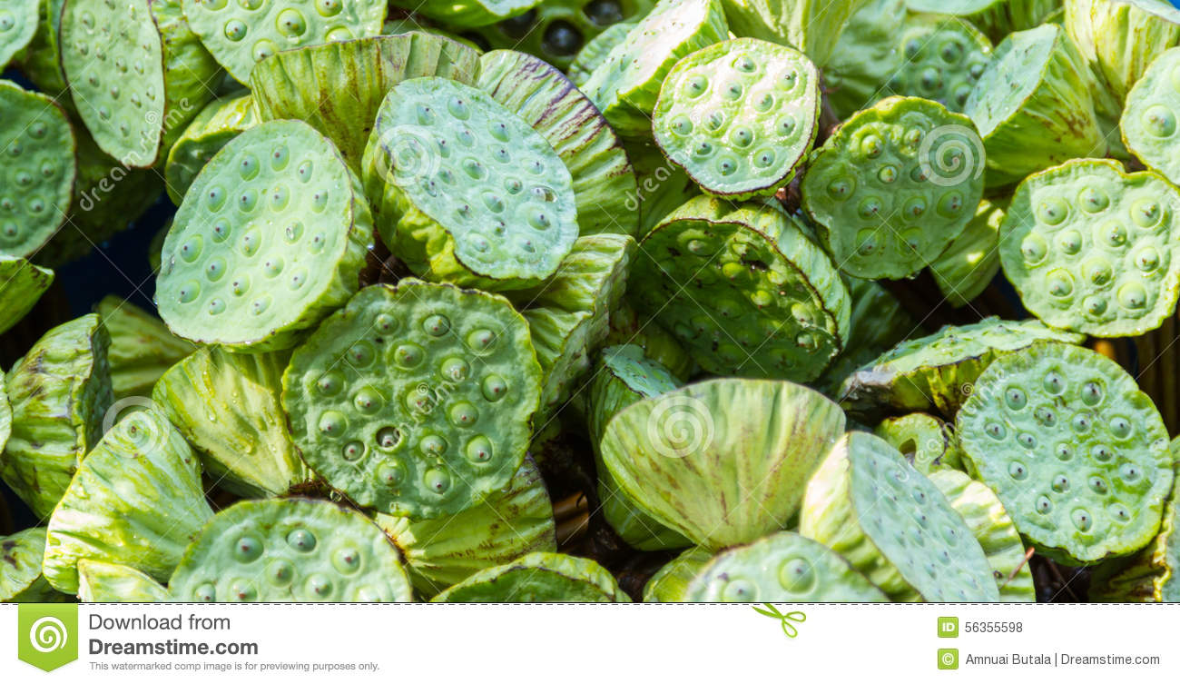 Green lotus flower for sale stock photo image of aquatic detail green lotus flower for sale izmirmasajfo