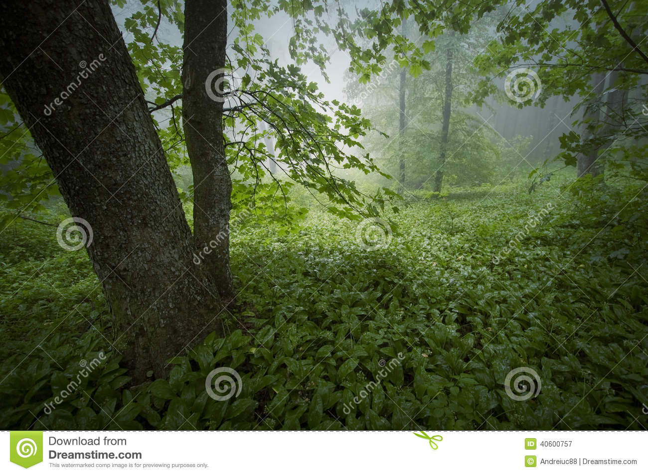 Green lush vegetation in forest after rain