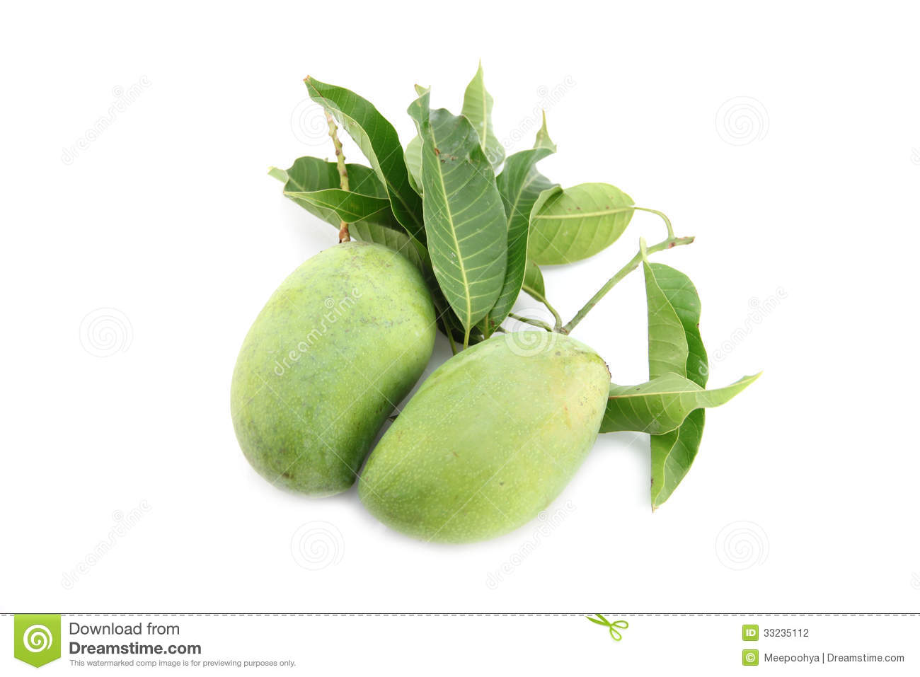 green mango and leaves stock photography image 33235112