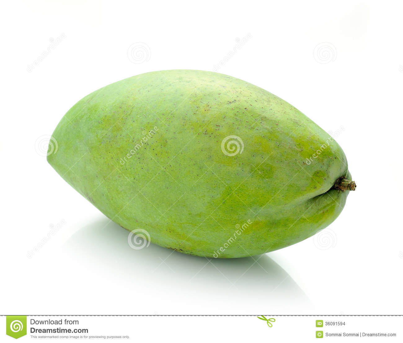 green mango on a white background stock images image