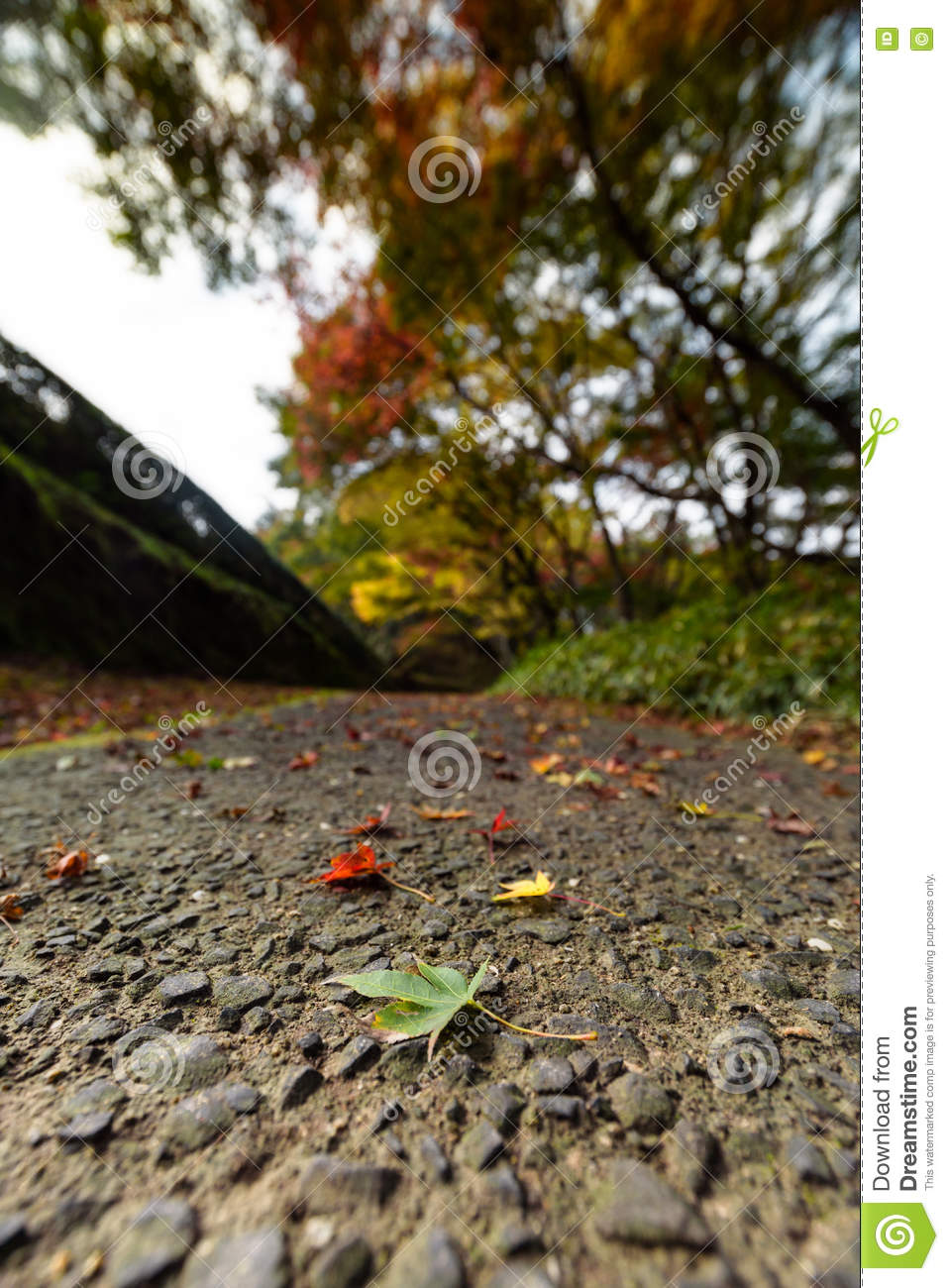 Green maple leaves and colorful trees in autumn and a footpath l
