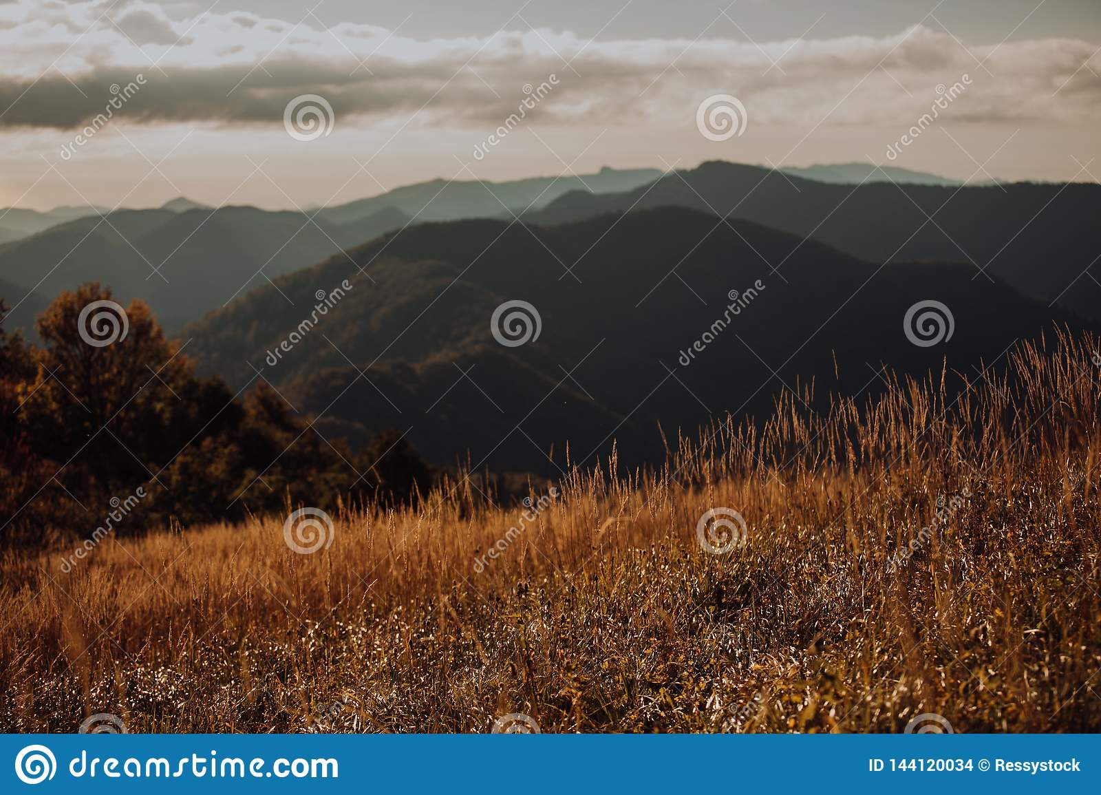 Green meadow on the background of the mountains