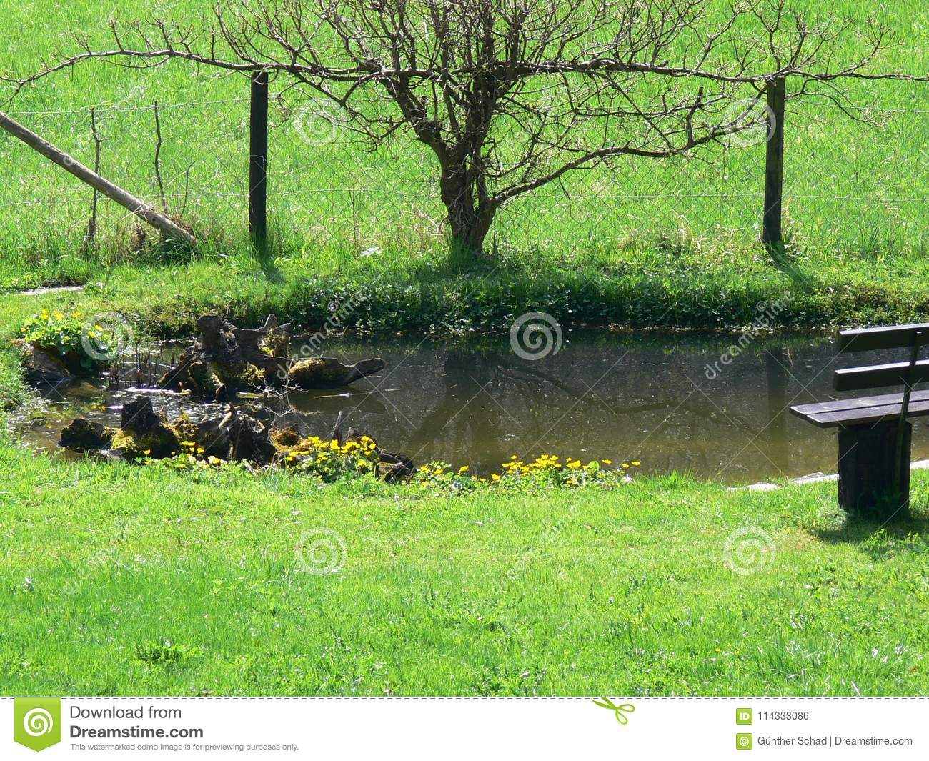 Stupendous Idyllic Garden Pond With Bench Stock Photo Image Of Small Cjindustries Chair Design For Home Cjindustriesco