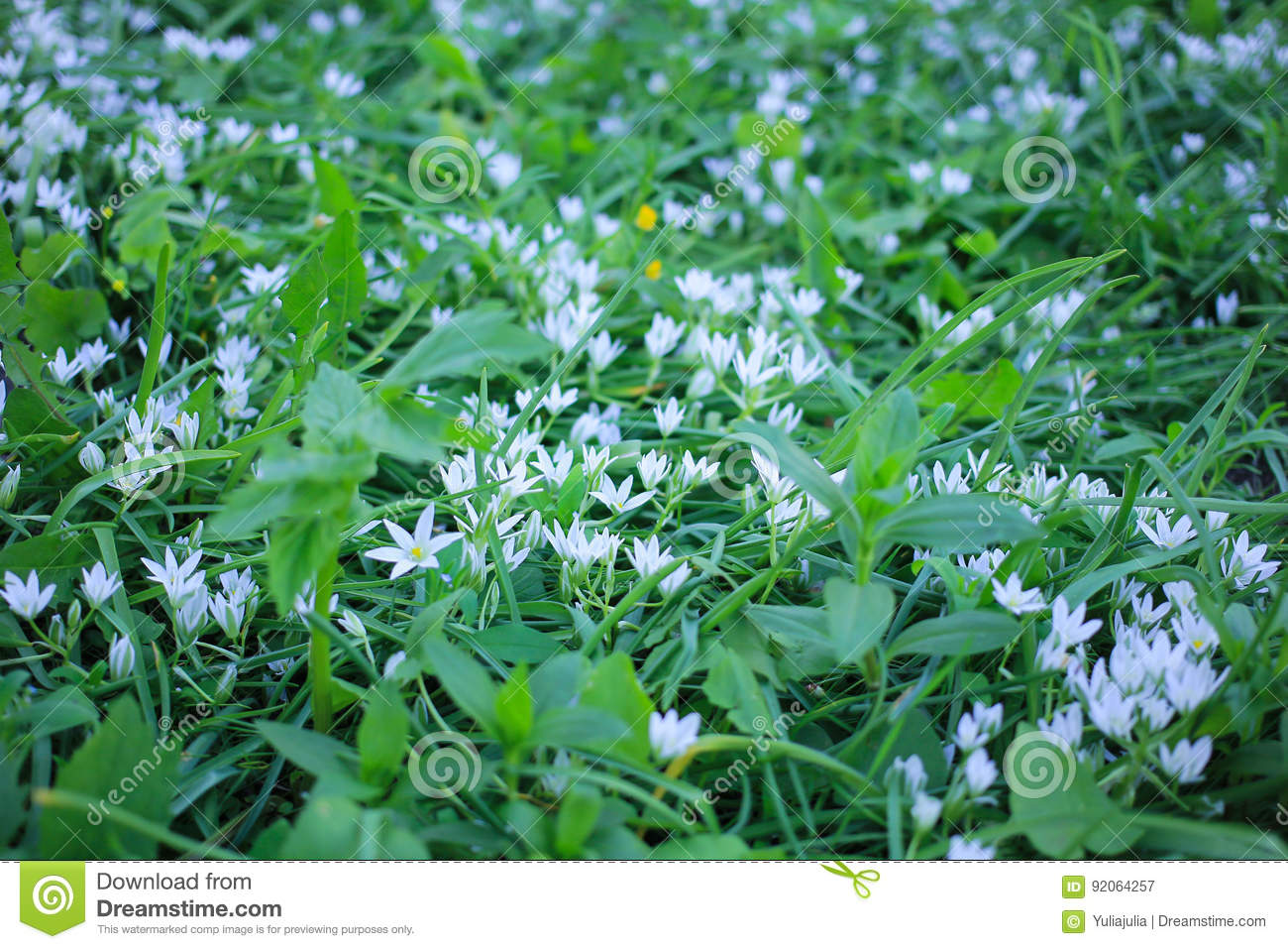 Green Meadow With White Small Flowers Of Lily Of The Valley Stock