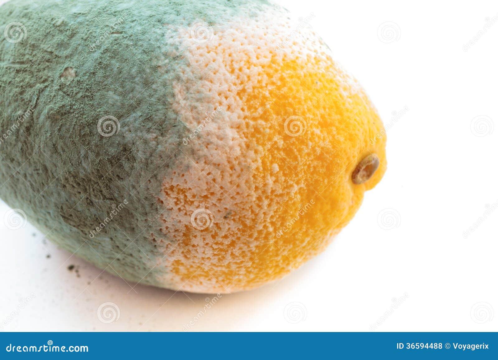 Green Moldy Lemon Citrus Fruit Isolated. Damaged Food. Royalty ...