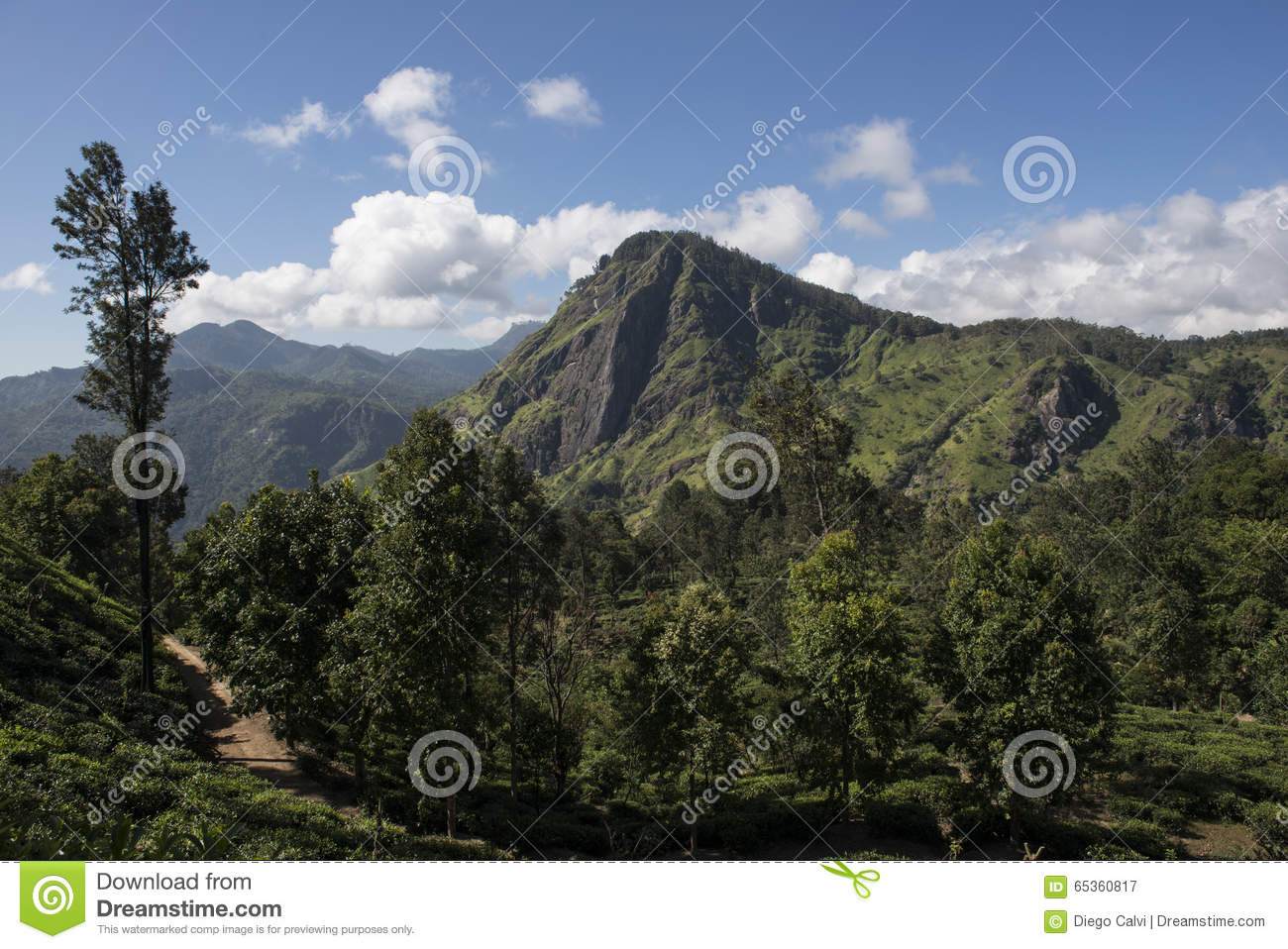 Download Green Montains With Tea Plantations Ella, Sri Lanka. Stock Image - Image of asia, landscape: 65360817